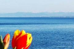 Blick von Meersburg über den See
